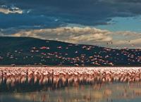 Накуру  озеро царства птиц