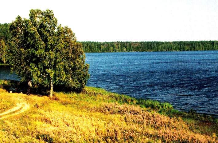 фидер на реке десна